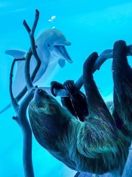 A visita surpresa deixou os golfinhos muito alegres  - Texas State Aquarium