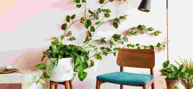 Conheça mais sobre a planta que tem tudo para roubar o espaço da samambaia: cuidados, dicas de decoração e inspirações - Reprodução/Pinterest