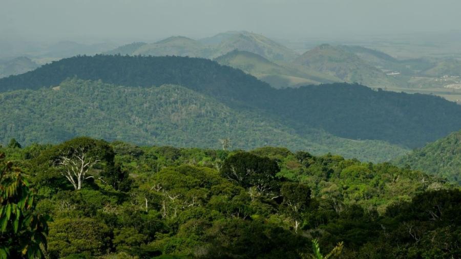 Paisagem da Estação Ecológica de Murici (AL), um dos maiores remanescentes da Floresta Atlântica do Centro de Endemismo Pernambuco - Hermínio Vilela