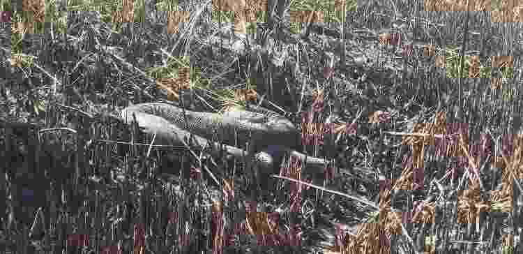 Cobra sucuri atingida por incêndio em Bonito - Corpo de Bombeiros Militar de Mato Grosso do Sul (CBMMS) - Corpo de Bombeiros Militar de Mato Grosso do Sul (CBMMS)