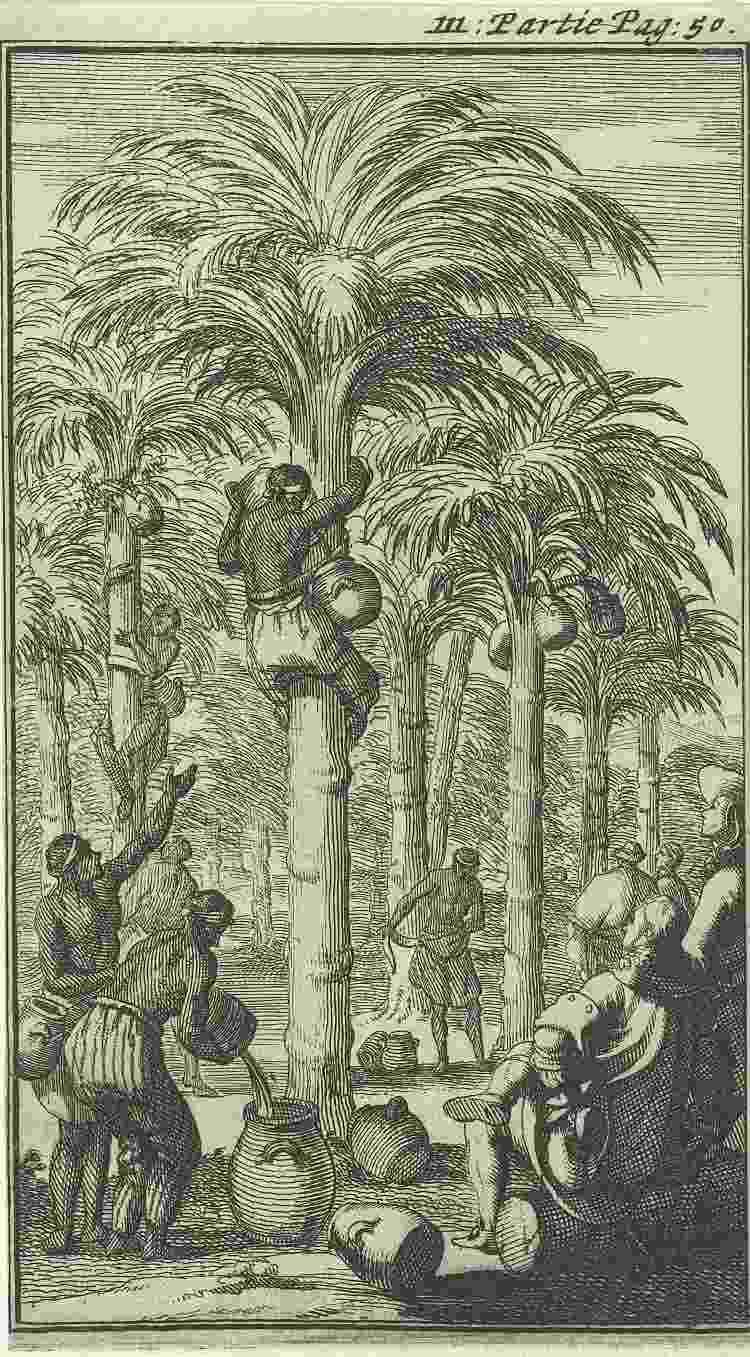 Ilustração de 1689 mostrando o trabalho de extração do vinho de palma na Índia - Sepia Times/Universal Images Gro - Sepia Times/Universal Images Gro