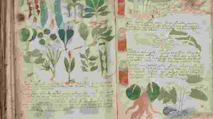 Imagem do misterioso Manuscrito Voynich; nem Nasa e CIA conseguiram decifrá-lo - Reprodução - Reprodução