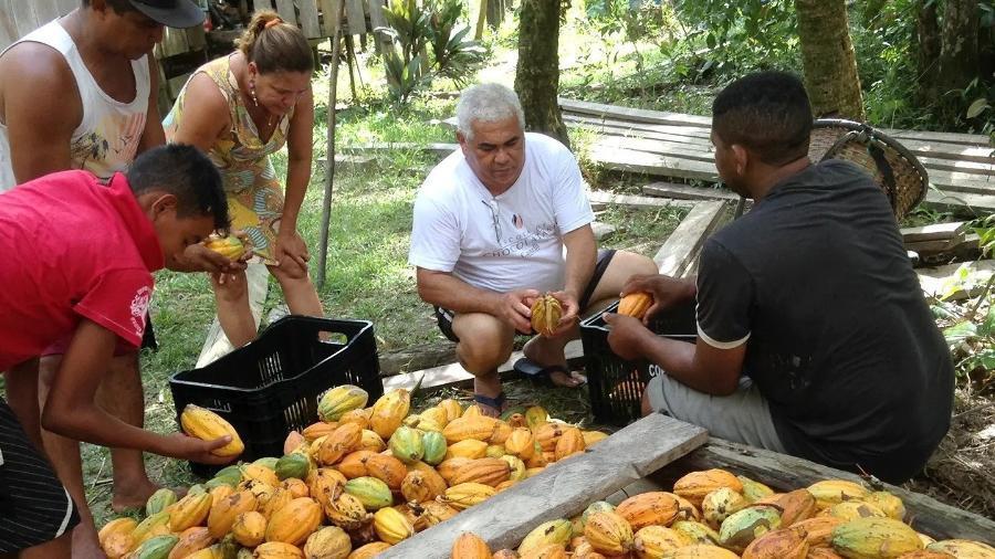 Cacau colhido por indígenas yanomami vira chocolate premium - Divulgação
