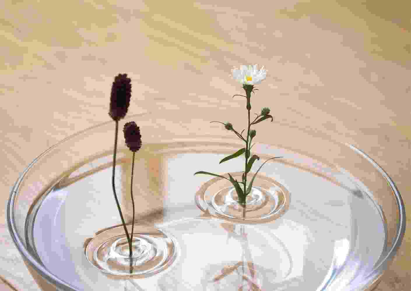 O efeito encanta: as flores parecem flutuar calmamente sobre um espelho d'água, livres de suportes. Para dar esta impressão, o escritório Oodesign (www.oodesign.jp) criou um vaso de resina com formato inspirado nas ondulações da água. Com um fundo vazado, o Ripple mantém as flores na posição vertical e os vegetais hidratados - Divulgação