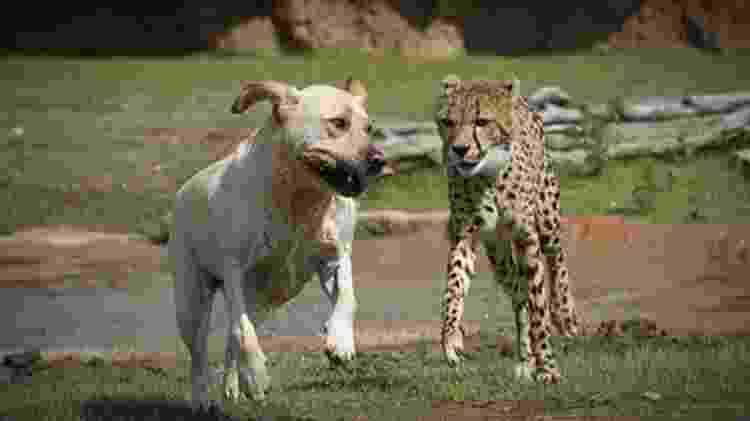 Reprodução/Columbus Zoo