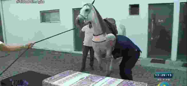 Apresentador coloca égua para testar qualidade de cama em merchand - Reprodução/TV Arapuan/RedeTV!