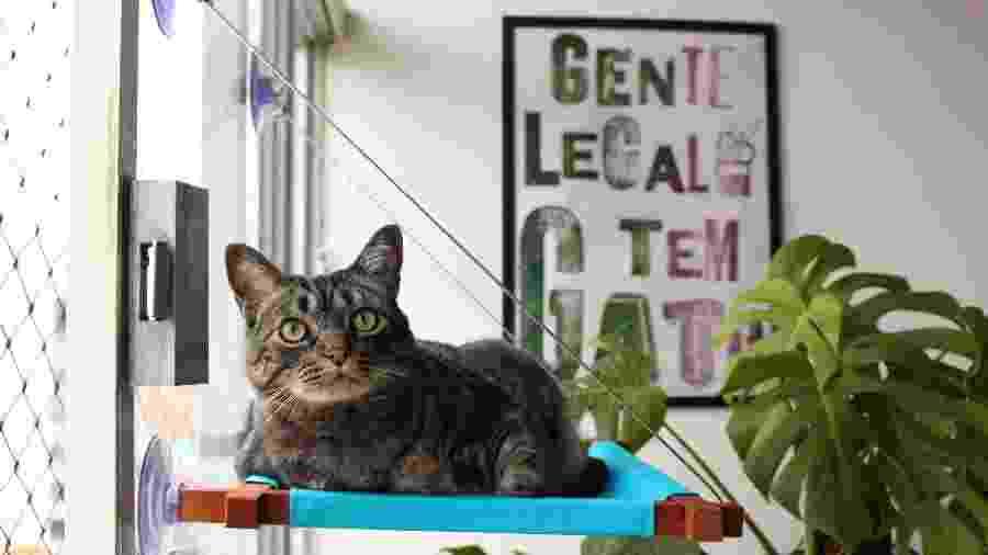 Estudo apontou possibilidade de que gatos possam transmitir coronavírus entre si - Divulgação