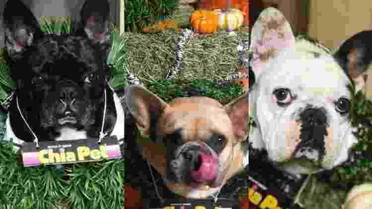 Os cachorros de Lady Gaga que estavam com o passeador baleado (da esquerda para direita): Asia, Koji e Gustave - Reprodução/Instagram/@ladygaga - Reprodução/Instagram/@ladygaga