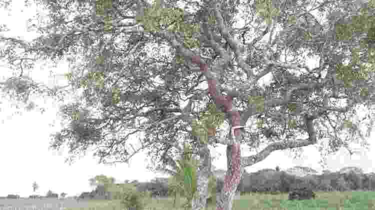 árvore - Arquivo Pessoal - Arquivo Pessoal