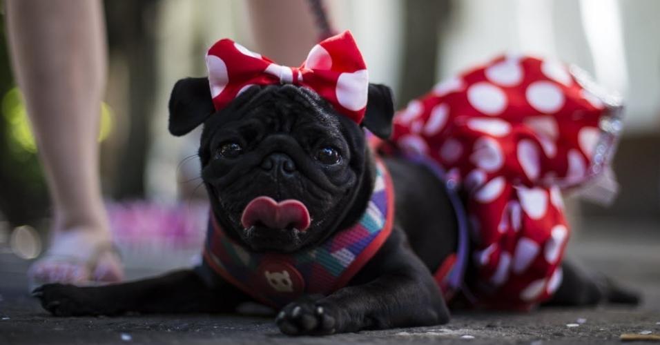 """Lolla, Cadela da raça Pug, chama a atenção fantasiada de Minnie no bloco """"Volta, Alice"""" no Rio de Janeiro"""