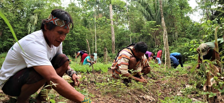 Agentes Agroflorestais Indígenas do Acre em aula prática de horta orgânica.  - Leilane Marinho/CPI-Acre.