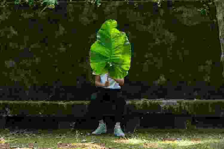 Roubar mudas é um crime de menor potencial ofensivo - Getty Images - Getty Images