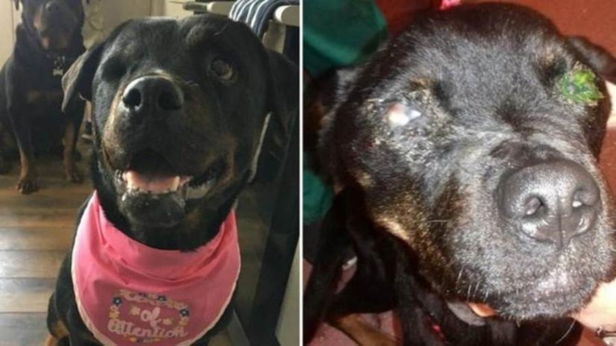 Tia se recuperou totalmente, após ser encontrada subnutrida e quase cega - SPCA