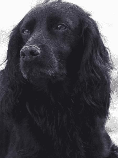 Lupo, cachorro do príncipe William e Kate Middleton - Reprodução / Instagram