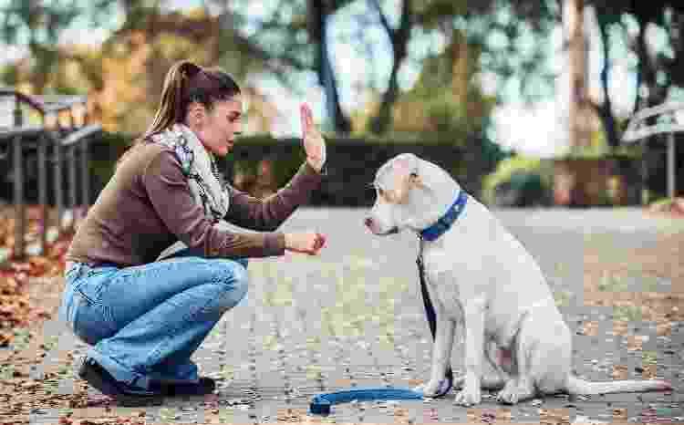 Paciência é essencial para adestrar seu pet em casa - Getty Images/iStockphoto - Getty Images/iStockphoto