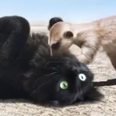 A gatinha Lizzy é a estrela do perfil Owl Kitty - Reprodução/Instagram