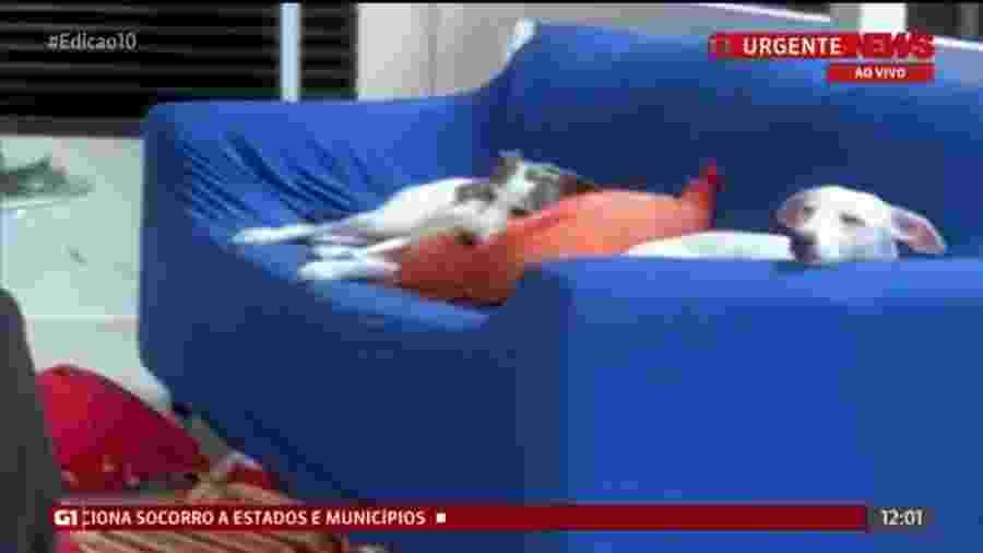 Animais dormindo no sofá do jornalista chamaram a atenção da apresentadora Aline Midlej - Reprodução/Globonews