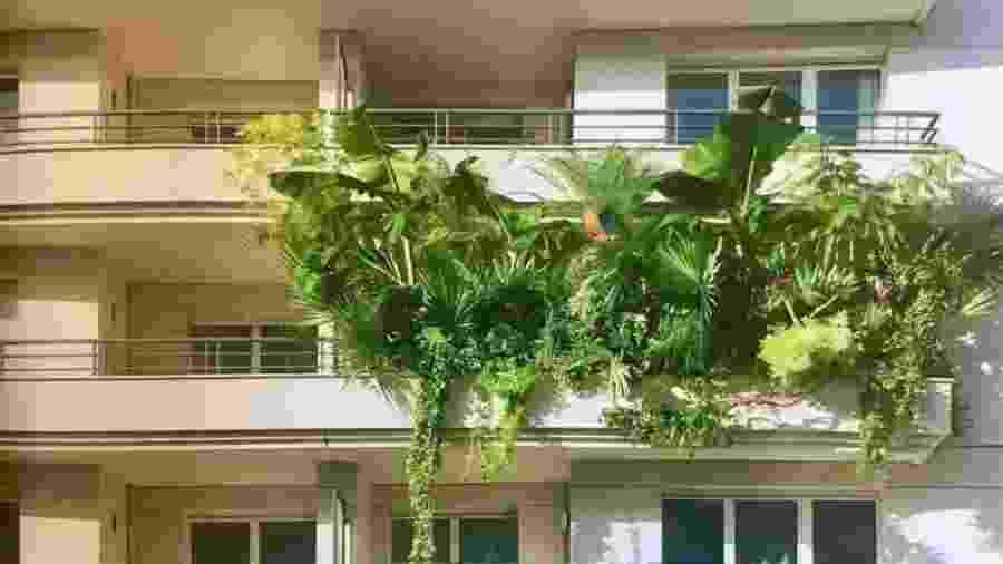 Apartamento viraliza no Twitter com sacada cheia de plantas - Reprodução/Twitter
