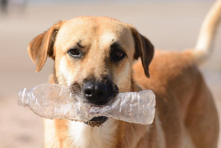 Não precisa gastar muito para fazer brinquedos que estimulam seu pet - Getty Images/iStockphoto - Getty Images/iStockphoto