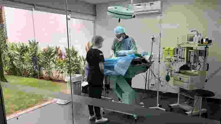 O hospital conta com equipe médica 24 horas e pode atender dezenas de gatos simultaneamente - Divulgação - Divulgação