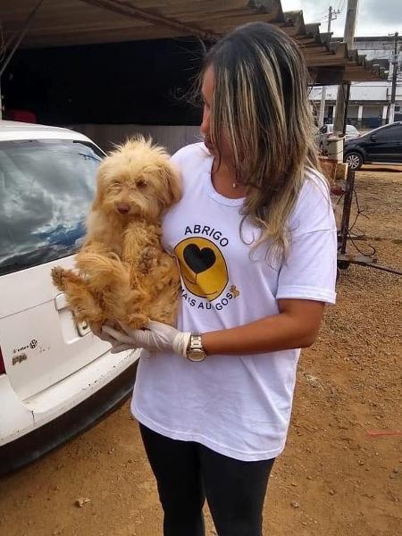 Leve dentro do carro isopor ou bolsa térmica com garrafinhas ou saquinhos preenchidos de água fresca para ajudar animais em estradas - Reprodução
