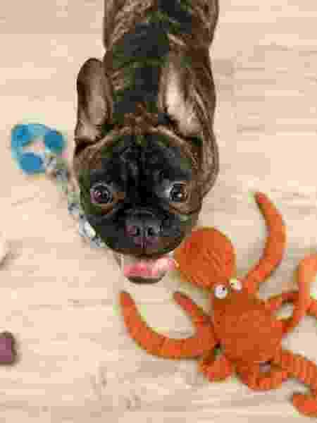 Os brinquedos preferidos podem ajudar a entreter o animal nos momentos em que ele estiver sozinho - Fernanda Luz/UOL - Fernanda Luz/UOL