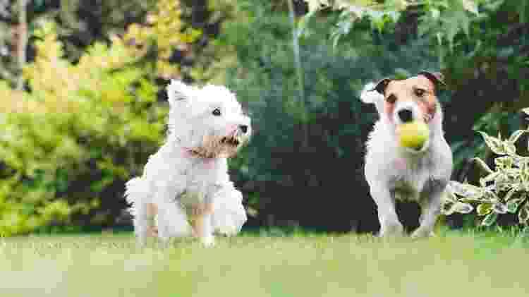 Os cães precisam interagir com outros cães - Getty Images - Getty Images