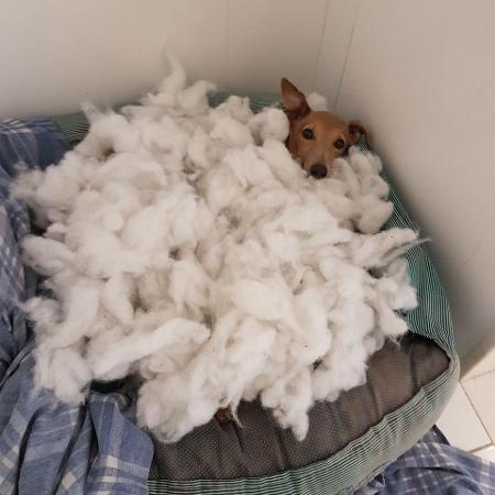Plínio, o cachorro de Anitta que anda aprontando nas redes da cantora - Reprodução/Instagram