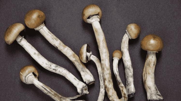 A psilocibina é um composto presente em cogumelos alucinógenos - GETTY IMAGES - GETTY IMAGES