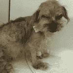 Luisa Mell divulga imagens dos cães resgatados em canil clandestino - Reprodução/luisamell