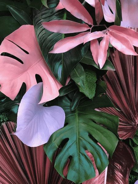 Plantas mudam o ambiente e podem influenciar na energia dos moradores - Reprodução/Instagram