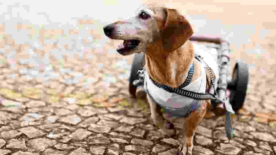 Cãezinhos deficientes ganham novos lares com a ajuda da tecnologia - iStock Images