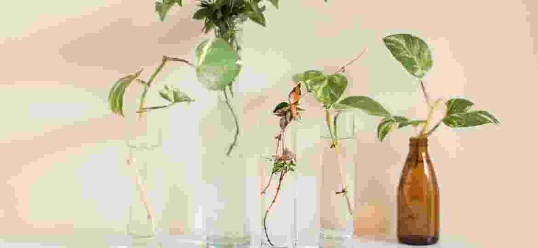"""Plantas cultivadas em água são a nova onda """"urban jungle"""" - Getty Images/iStockphoto"""