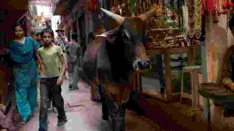 Vaca circula calmamente por área comercial de Varanasi, na Índia - Getty Images