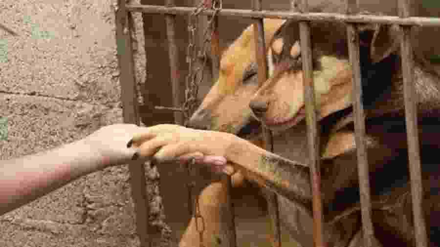 Seja pela crise, seja pelo medo de que cães e gatos transmitam o coronavírus, seja pela mudança de vida causada pela pandemia, mais donos de animais de estimação estão se desfazendo dos seus outrora melhores amigos - ONG CÃO SEM FOME/DIVULGAÇÃO