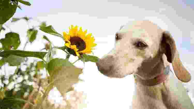 """Você sabia que girassol é uma planta """"amiga"""" dos bichinhos? - Getty Images - Getty Images"""