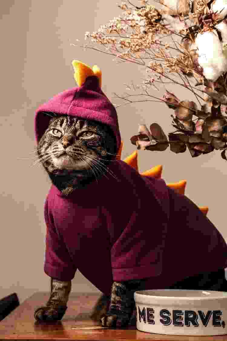 Chico é um dos casos não muito usuais de gatos que gostam de vestir roupinhas e fantasias - Fernando Moraes/UOL - Fernando Moraes/UOL
