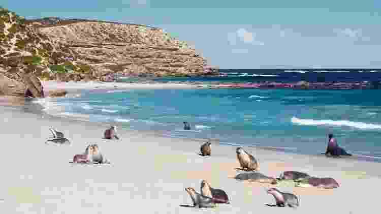 Kangaroo Island, na Austrália - Divulgação/South Australian Tourism Commission - Divulgação/South Australian Tourism Commission