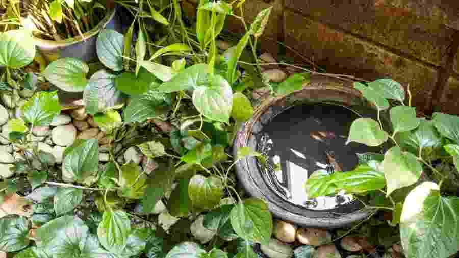 Criadouros do mosquito da dengue têm água parada - ThamKC/iStock