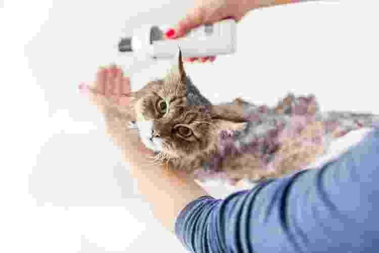 Se for banhar seu gato em casa, prepare tudo para reduzir o estresse do bichano - Getty Images/iStockphoto - Getty Images/iStockphoto
