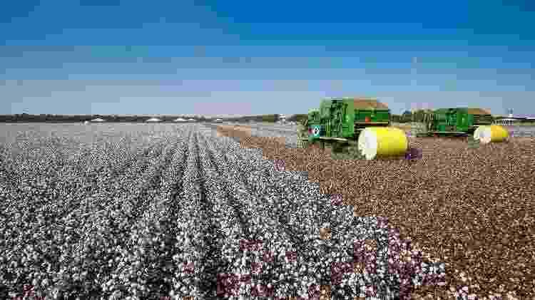 Cultura de algodão em Lucas do Rio Verde (MT): campeã em uso de agrotóxicos - Alan Santos - Alan Santos
