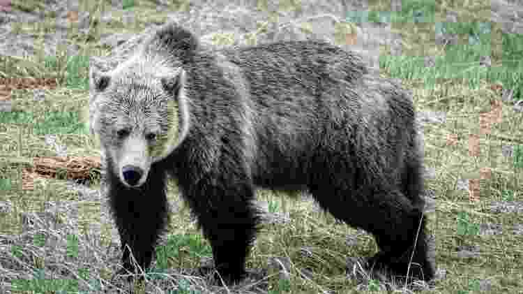 Urso fotografado por Jamie Albino durante viagem em área selvagem do Canadá - Jamie Albino - Jamie Albino