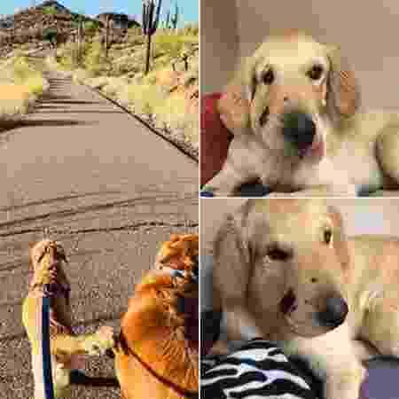 À esquerda, foto de Todd na caminhada; à direita, fotos de Todd com o rosto inchado pela picada - Paula Godwin - Paula Godwin