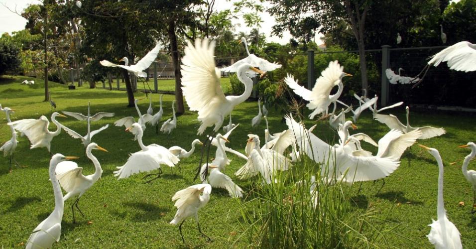 A alimentação de animais como aves e piranhas é uma das atrações abertas para o público no Mangal das Garças, na capital do Pará