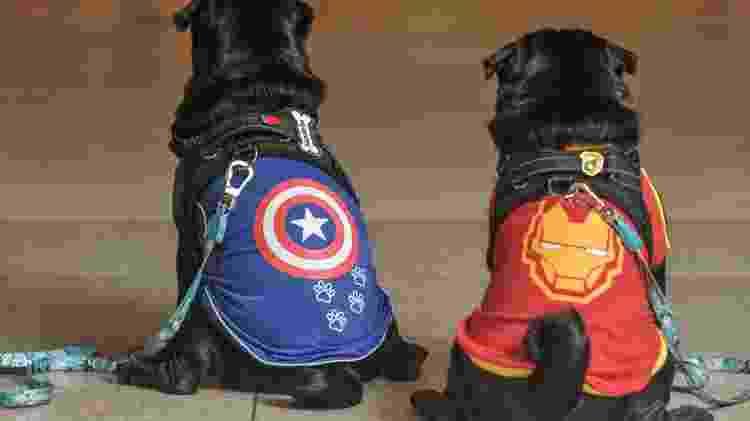 Os pugs Romeu e Napoleão foram vestidos com as roupinhas dos Vingadores - Reinaldo Canato/UOL