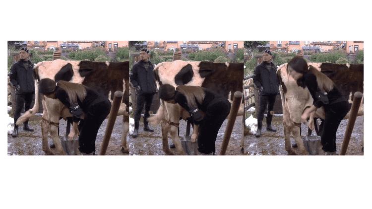 A Fazenda 2021: Liziane levando 'rabada' de vaca - Reprodução/Playplus - Reprodução/Playplus
