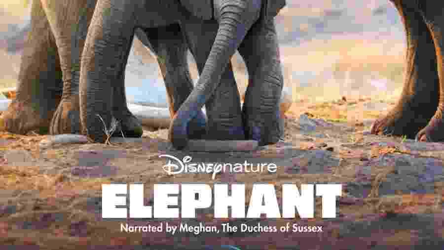 """Pôster do documentário """"Elephant"""", narrado por Meghan Markle - Divulgação"""