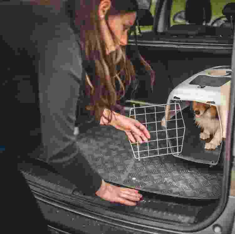 Também há regras para transporte de pets em ônibus e carros - Getty Images/iStockphoto - Getty Images/iStockphoto