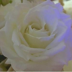 Ana Hickmann posta foto de rosa branca em seu perfil do Instagram e agradece apoio que tem recebido - Reprodução/Instagram/ahickmann