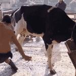 """Rafael Ilha toma coice de vaca em """"A Fazenda 10"""" - Reprodução/PlayPlus"""